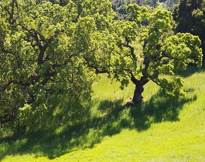 Jack London State Historic Park at California